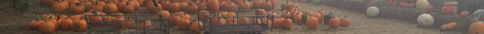 Higginsville Pumpkin and Mum Farm
